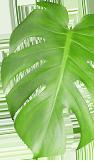 leafimg floatRgt