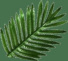 leafimg floatLft